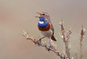 Vroege vogels afbeelding